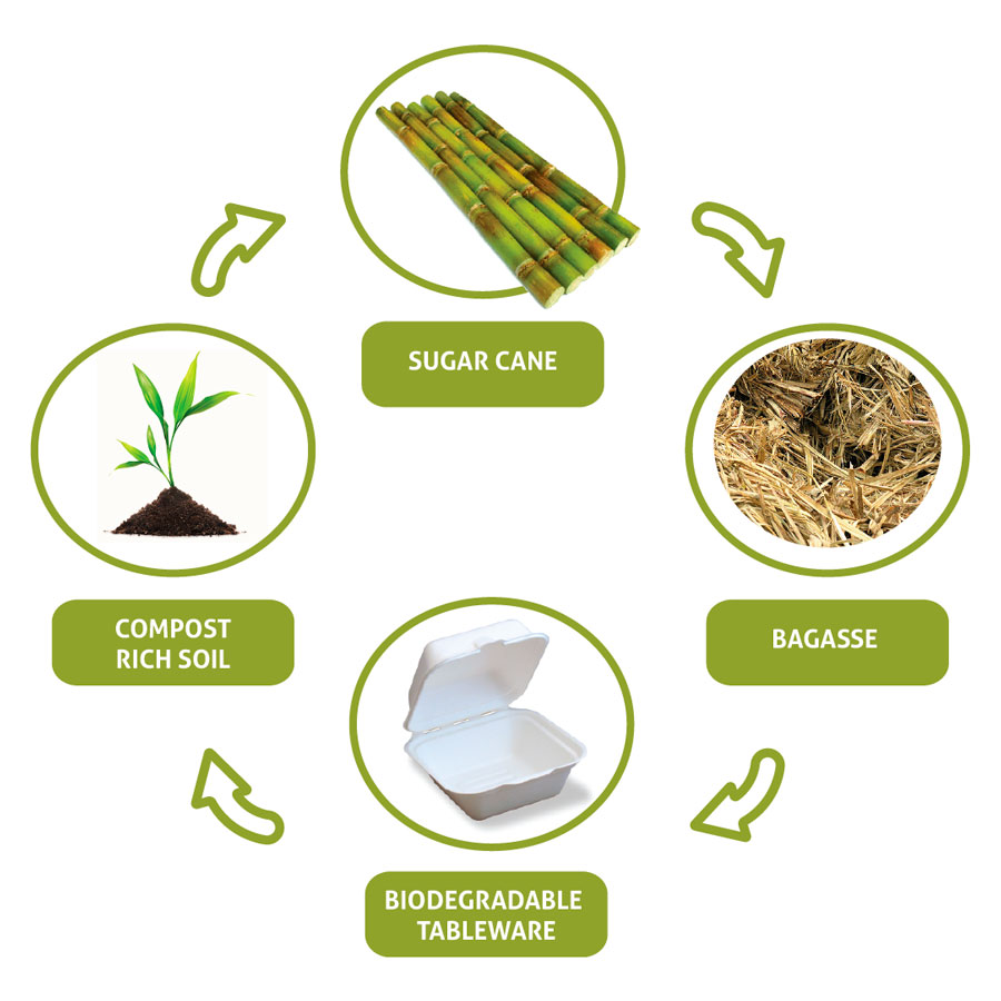 Biodegradable cycle Segmentos del mercado